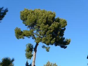 pin sur fond de ciel bleu