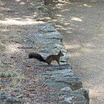 """La villa """"Terre-Brûlée"""" reçoit la visite d'écureuils"""